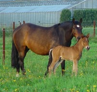 Colt Foal By Fijal Fortissimo (see GCStud Page) x Ashley Starletta Born April 2005