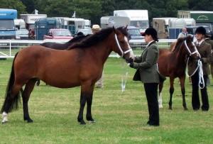 juliette breed 08