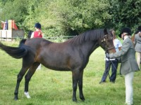 Dawns Little Miss  2007 - Green Cottage Ambassador x Mtoto