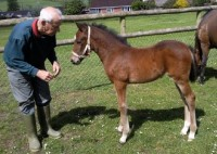 Congratulations to Mr & Mrs Ellis, who have finally got the beautiful bay filly they wanted 3rd time lucky!!