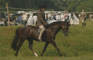 Green Cottage Fantasia chestnut mare, Fijal Encore x Hurstfield Astra (owned by A.Wiseman)