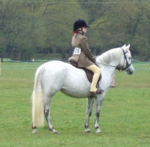 Green Cottage Finesse  grey mare, Peveril Peter Piper x Sabinas Silver Shadows