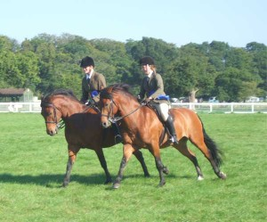 Green Cottage Countryman bay gelding, Peveril Peterborough x Hurstfield Astra (owned by E.Volney) Sire to Green Cottage Jamboree