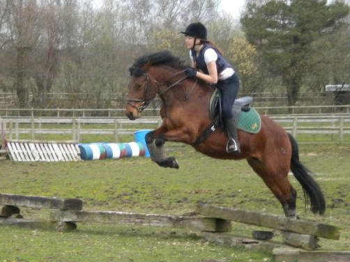 Green Cottage Jasmine bay mare, Green Cottage Ambassador x Hurstfield Astra  (owned by L.Maidment)